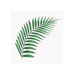 Pachet 20 Șervețele Frunză Ferigă Hârtie Alb - Verde S