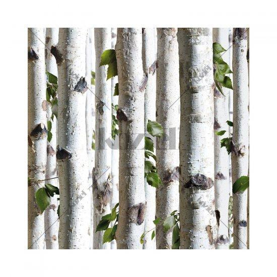 Tapet Pădure de Mesteacăn Tânăr