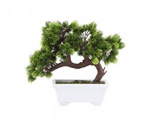Plante & Ghivece